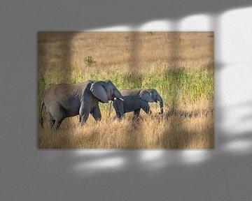 Les éléphants parcourent la savane africaine. sur Els Peelman