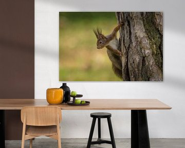 Eichhörnchen am Baum von Tobias Luxberg