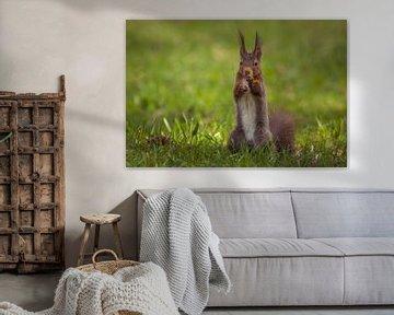 Eichhörnchen Portrait von Tobias Luxberg