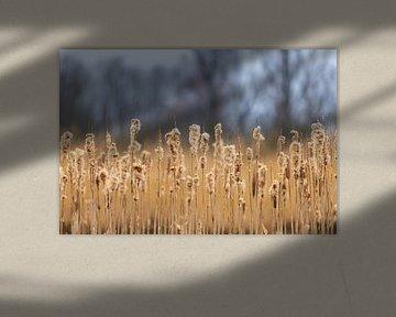 Flauschige Seerosen von JWB Fotografie