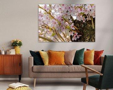 Frühlingsblüte von Lieselotte Stienstra