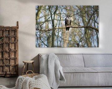 Buizerd in het bos van Marian Sintemaartensdijk