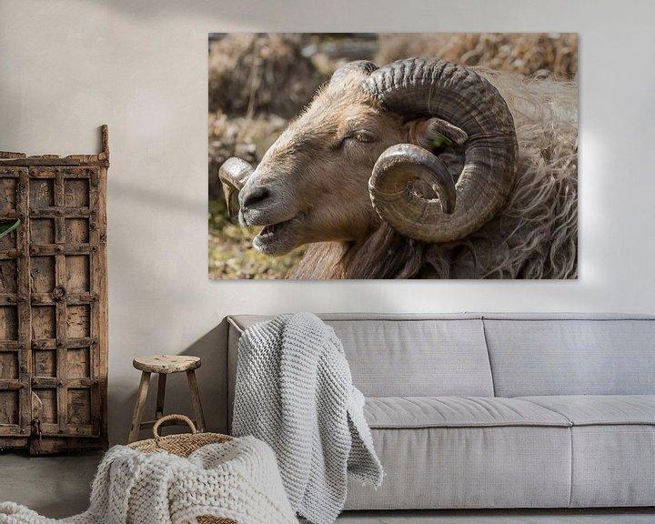 Sfeerimpressie: Drents heide schaap van Jeannette Braamskamp