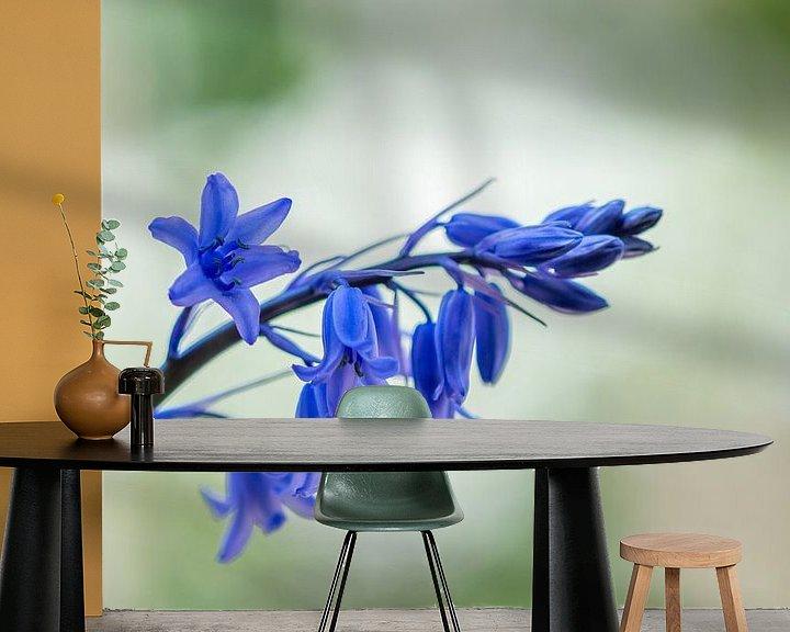 Beispiel fototapete: Glockenblumen wilde Hyazinthe von John van de Gazelle