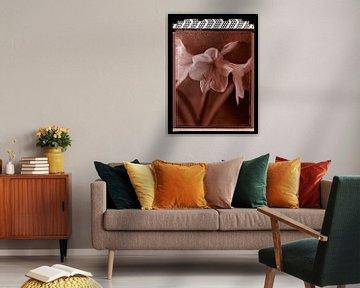 Polaroid Amaryllis van Karel Ham