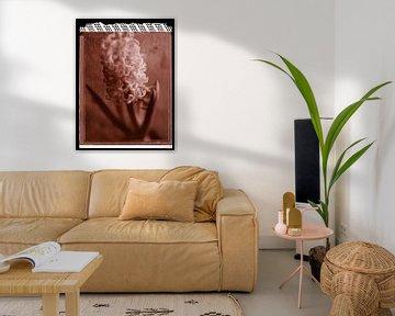 Polaroid Hyacint van Karel Ham