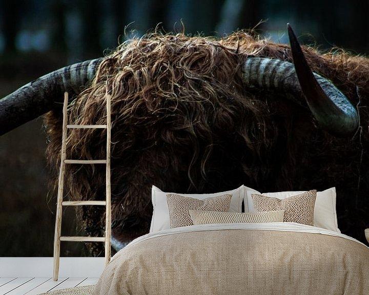 Sfeerimpressie behang: Schotse hooglander koe van North Scape