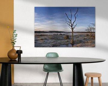boom van Rene van Rijswijk