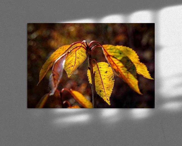 Sfeerimpressie: Herfstkleuren van Rob Boon