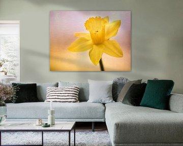 Narcis Lente feest van natascha verbij