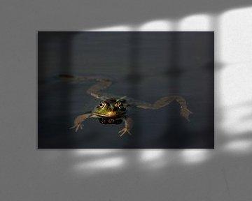 Kikker van Sense Photography