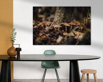 Champignons en gros plan sur domiphotography