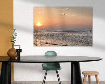 Goéland volant à Wijk aan Zee sur Christa Stroo fotografie