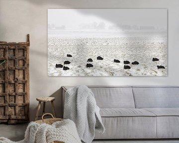 Meerkoeten in sneeuwstorm van Johan Zwarthoed