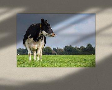 Holstein Zwartbont koe in het Nederlandse landschap van Marc Venema