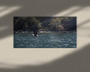 Pro Fishing sur BL Photography