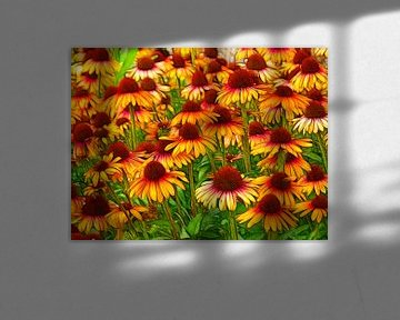 Zonnehoed (Echinacea) van Caroline Lichthart