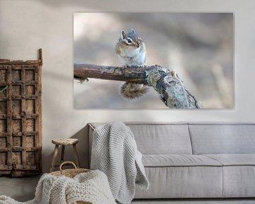 Sibirisches Erdhörnchen von Henk Groenewoud