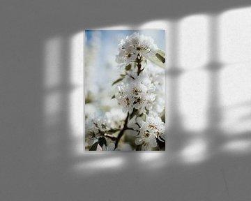 Close-up boomtak witte bloesem | Ede, Nederland van Trix Leeflang
