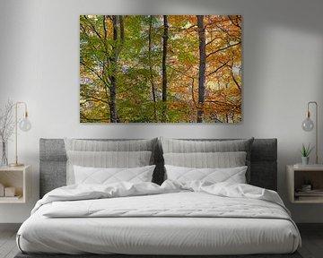 herfst in het bos van Hanneke Luit