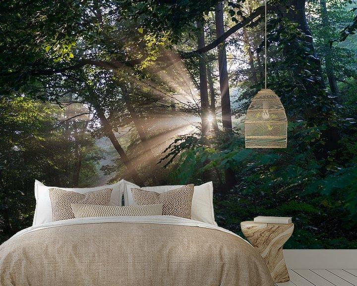 Beispiel fototapete: Magisches Licht im Wald von Adriana Mueller