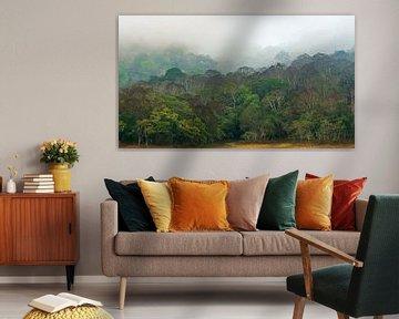 Jungle kleuren van Adri Klaassen