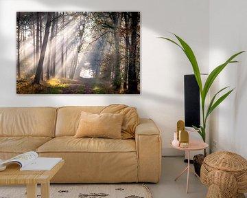 Zonneharpen in de Laurabossen van Peschen Photography
