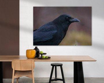 Zwarte kraai van Guido Rooseleer