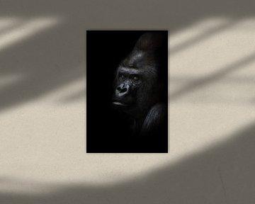 Gefährliche Gorilla männlich suchen halb gedreht, schwarzer Hintergrund mächtig männlich, reiben sch von Michael Semenov