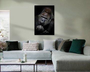 Schwere Meditationen eines mächtigen männlichen Gorillas mit glänzendem Fell und anspruchsvollem Bli von Michael Semenov