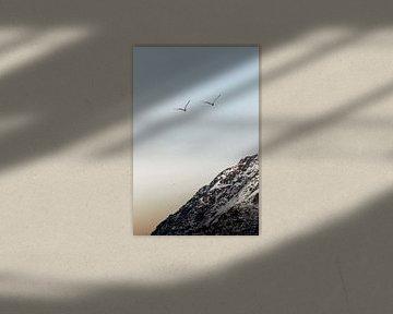 Vogels in vlucht in Noorwegen | Bergen in Lofoten zonsondergang