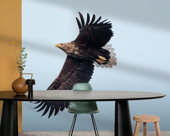 Impression: Aigle à queue blanche sur fond bleu | Photographie d'oiseaux Norvège | Tirage photo nature sur Dylan gaat naar buiten