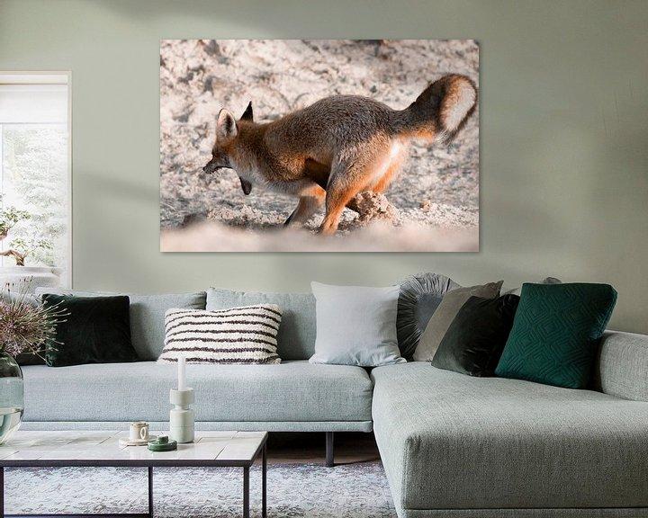 Sfeerimpressie: Gravende vos in de duinen | Wildlife in Nederland van Dylan gaat naar buiten