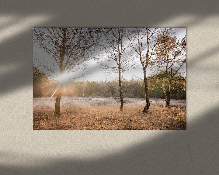 Sfeerimpressie: Zonsopkomst op de hei | Rijp in Nederlands landschap van Dylan gaat naar buiten