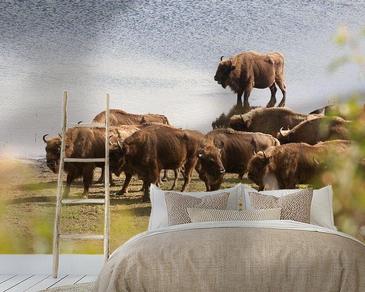 Sfeerimpressie behang: Kudde bizons aan het water   Kraansvlak, Noord-Holland van Dylan gaat naar buiten