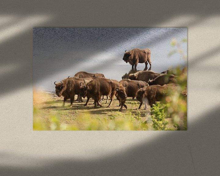 Sfeerimpressie: Kudde bizons aan het water   Kraansvlak, Noord-Holland van Dylan gaat naar buiten