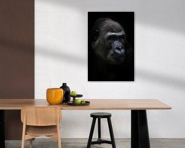 Ruhig weiblichen anthropoiden Gorilla schaut ruhig in die Ferne, Porträt schwarzen Hintergrund von Michael Semenov