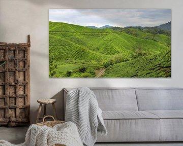 Plantation de thé en Malaisie sur Niels van den Berg