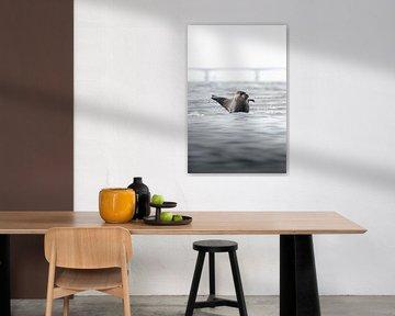 Zwaaiende zeehond | Natuurfotografie Zeeland van Dylan gaat naar buiten
