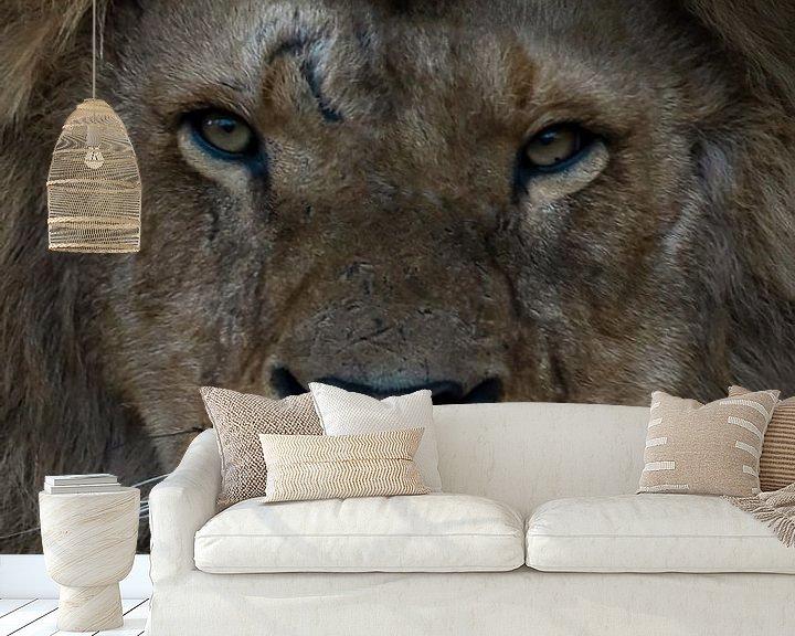 Beispiel fototapete: Löwe: Nahaufnahme eines Löwenkopfes von Marjolein van Middelkoop