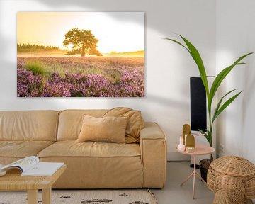 Zonsopgang boven bloeiende heide in natuurgebied de Veluwe van Sjoerd van der Wal