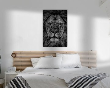 Leeuwen: portret van een leeuw in zwart-wit van Marjolein van Middelkoop