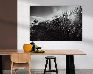 Zwart-wit landschapsfotografie van JBJart Justyna Jaszke