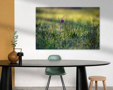 Vanneau en fleur dans un champ
