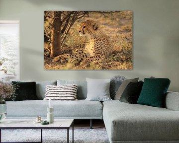 Gepardenjunges im Gras von Bobsphotography