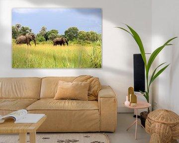 Afrikanische Elefanten in freier Wildbahn von Bobsphotography