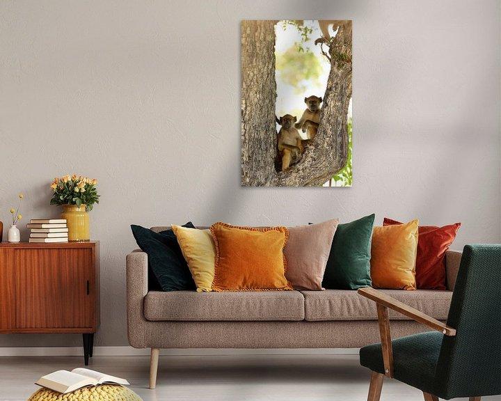 Sfeerimpressie: Twee bavianen in een boom. Grappig dieren. van Bobsphotography