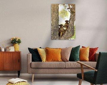 Zwei Paviane in einem Baum von Bobsphotography