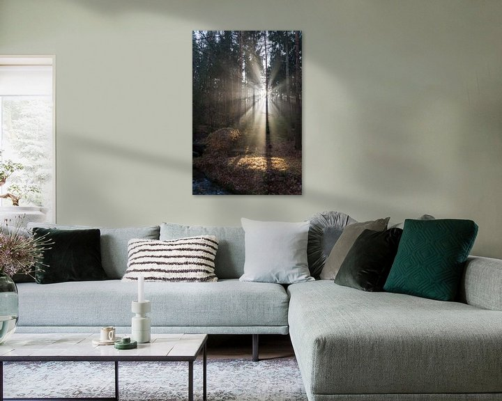 Beispiel: Winterlicht im Wald 3 von Adriana Mueller