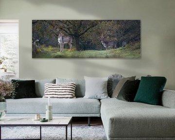 damherten (panorama) van Bart Hardorff